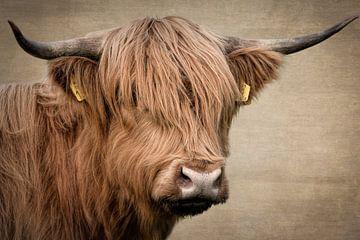 Schotse Hooglander portret: Digital Art van Marjolein van Middelkoop