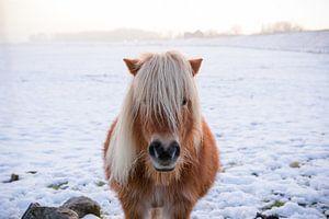 Paardje in de sneeuw van