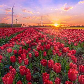 Tulpenveld Noordostpolder in de schemer van Rens Marskamp