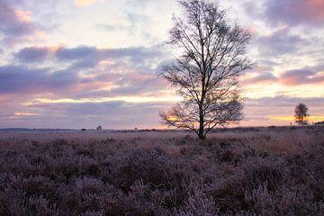 Sonnenaufgang veluwe Holland von Rick van de Kraats