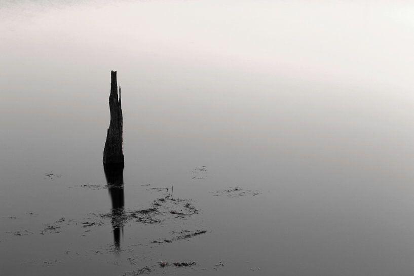 Reflection in schwarz und weiß .. von Miranda van Hulst