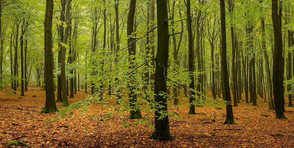 Herfst panorama van Sjoerd van der Wal