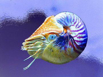 Onderwaterwereld   02 van Dirk H. Wendt