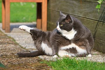 Dikke yoga kat von Dennis van de Water