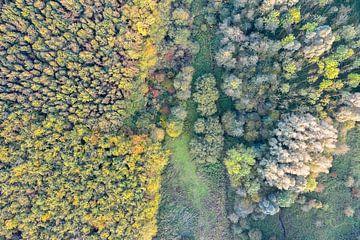 Laubwälder in den Niederlanden von Jeroen Kleiberg