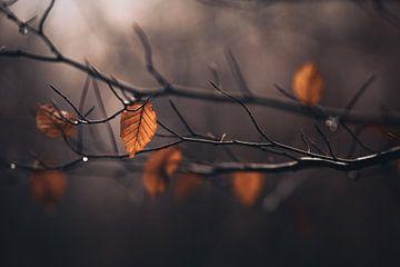 De laatste herfstbladeren van Florian Kunde