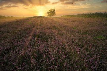 Coucher de soleil sur la lande sur Joran Quinten