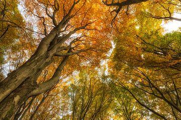 Een kijkje omhoog bij deze oude bomen levert een mooi beeld op van Paul Weekers Fotografie