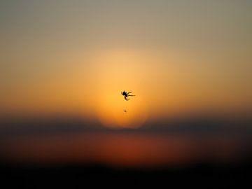 Fliegende Spinne von BHotography