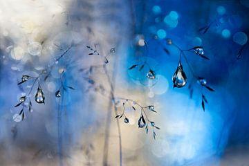 Blauwe regen, Heidi Westum van 1x