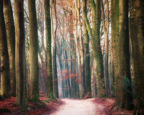 Door de hoge bomen