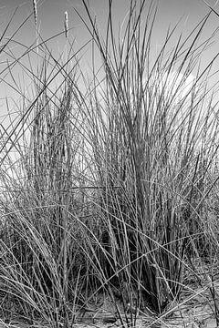 Helmgras zwart-wit van Walter Frisart