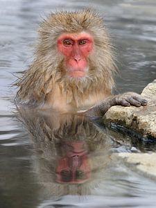 Lachspiegel Zonder Lach (Japanse Makaak) van