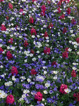 Bloemenveld van Corine Harkes