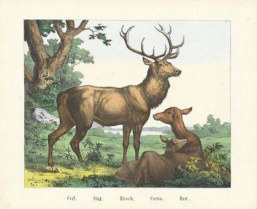 Hert, Firma Joseph Scholz, 1829 - 1880