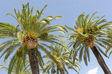 Palmen in Italien von Mark Bolijn