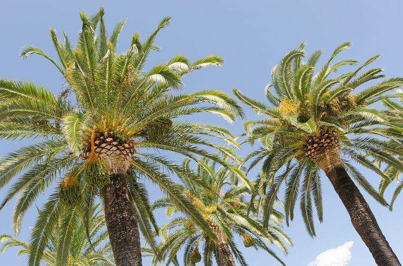 Palmbomen in Italië van Mark Bolijn