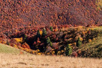 Herbstwald am Monte Baldo von Severin Frank Fotografie