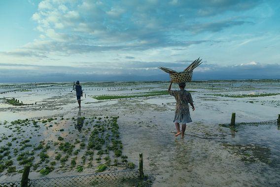 Zeewier boeren van Niels Boere