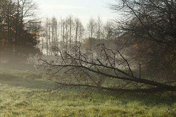 Lac, ambiance d'automne, brouillard au sol, givre, arbres, paysage, Fischerhude, Basse-Saxe, Allemag sur Torsten Krüger