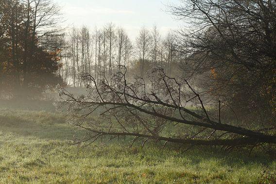 See, Herbststimmung, Bodennebel , Raureif,  Bäume, Landschaft, Fischerhude, Niedersachsen, Deutschla
