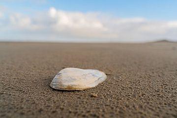 Schelp op het strand van Ameland van henry hummel