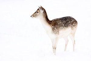 Portret damhert in de sneeuw