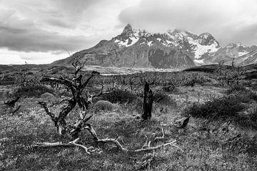 Wandelpad in Torres del Paine Nationaal Park met uitzicht op het Torres Paine massief van Shanti Hesse