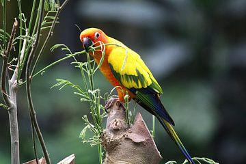 Kleurrijke Papegaai. van Cobie Reuvers