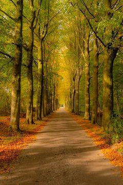 Landstraße durch einen Buchenwald an einem schönen Herbsttag von Sjoerd van der Wal
