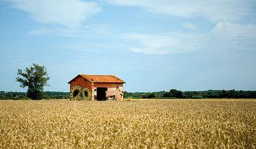 Huisje van zonnebloemen van Judith Snel