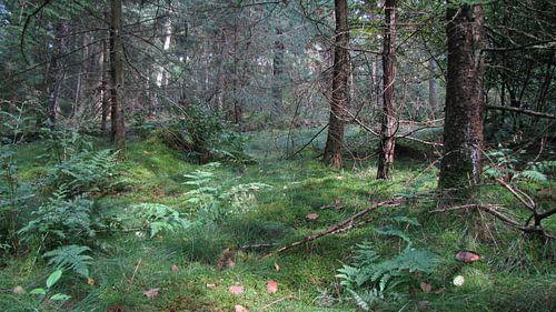Bosgrond  van