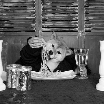 Shiba Inu & Spaghetti van Ebru Göçmen