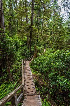 Slingerend pad in het gematigde regenwoud van vancouver eiland van Eelke Brandsma