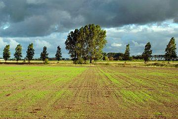 Zeeuws-Vlaamse polder in de buiige ochtendzon van Anne Hana