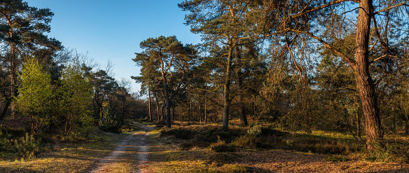In The Forest van William Mevissen