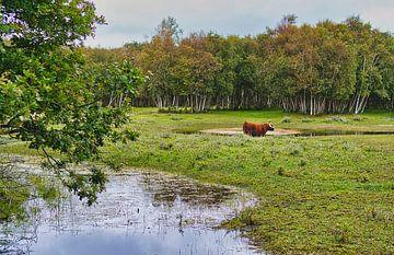 Schotse Hooglander van Wendy Tellier - Vastenhouw