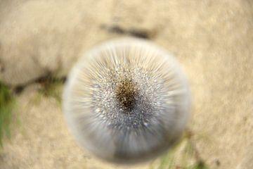 Zand van Mirjam van Vooren