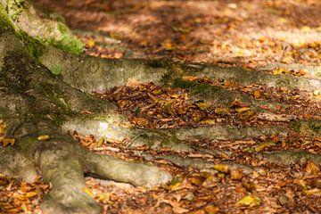 Herfst in Oranjewoud van Willy Sybesma