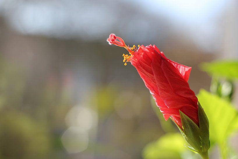 Bloem in bloei von Menno van der Werf