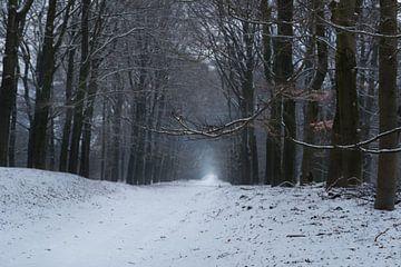Bospad in de sneeuw van Cilia Brandts