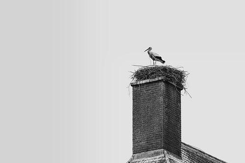 Ooievaar Op Nest van Thomas Duiker