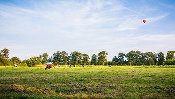 Kühe auf dem Feld, wo ein Heissluftballon über die Erde fliegt von Michel Geluk