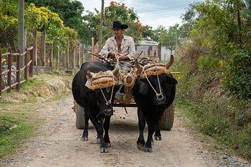 Ein Einrahmer mit Viehtransportwagen im Vinales-Tal von Jeroen Kleiberg