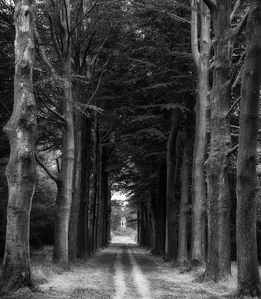voie d'arbre sur Eddie Meijer