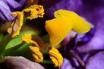 Blütenmakro von Anette Jäger