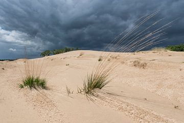 Bedrohlicher Himmel – Nationalpark De Loonse en Drunense Duinen von Laura Vink