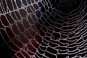 artwork spider... kunst van de spin