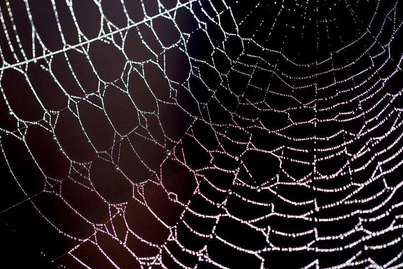 artwork spider... kunst van de spin van Els Fonteine
