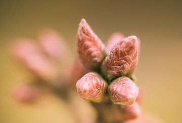 Le printemps arrive sur Jorrit Eijgensteijn